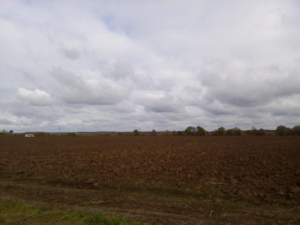 Колхозные поля, картофель! На самом деле администрация города - молодцы, город чистый как и их окрестности! Много колхозных полей!