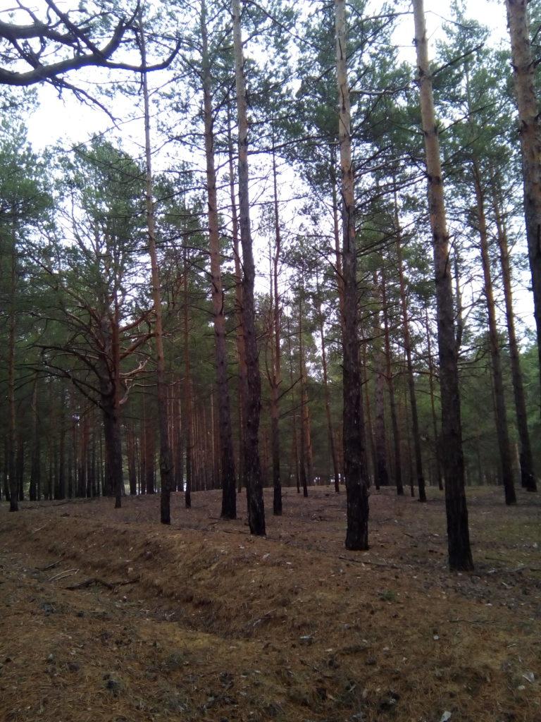 """Открытие проекта """"Путешествия: от заката до рассвета"""" маршрут """"На разливе Оки"""""""