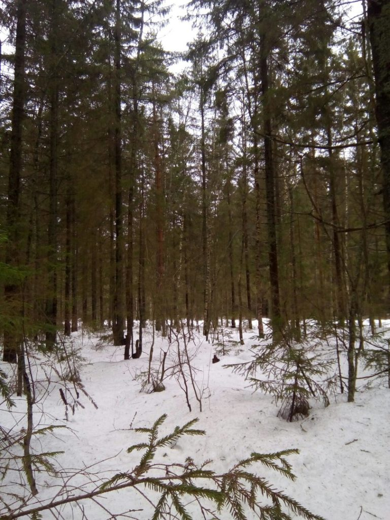 """Путешествие в Ярославские лес """"Весенний лес"""""""
