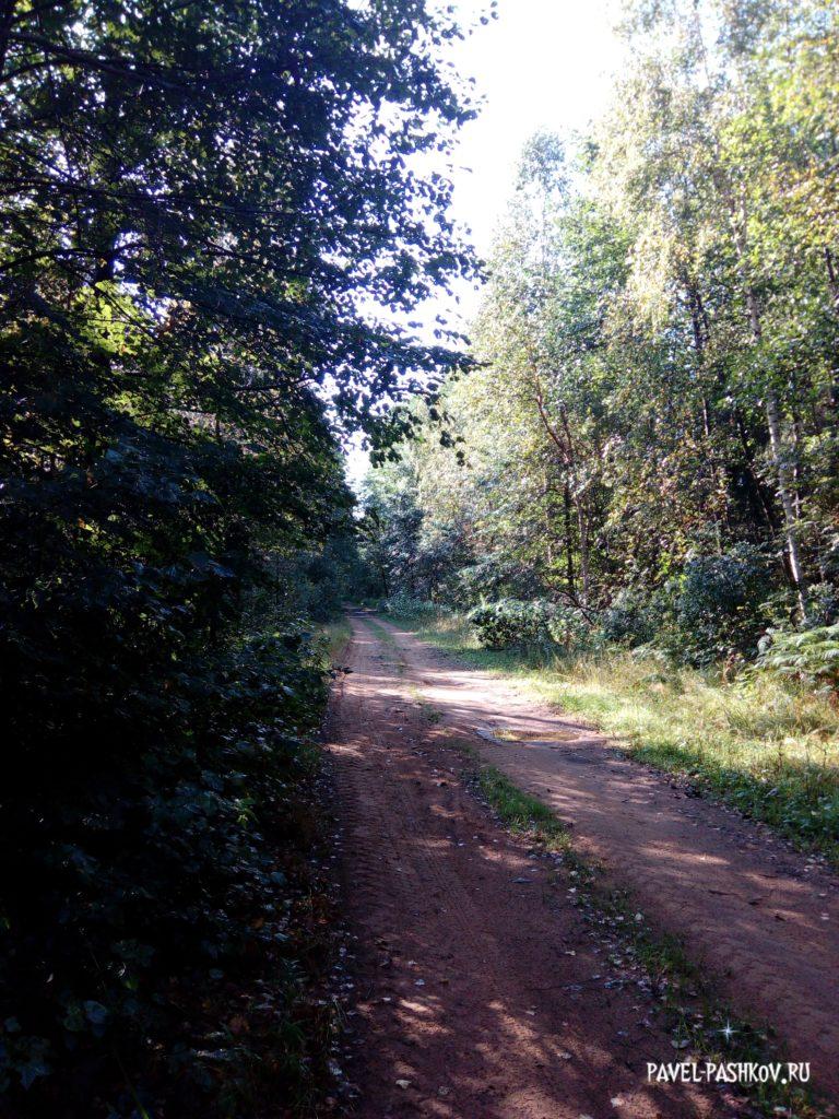 Путешествие в Рязанские леса