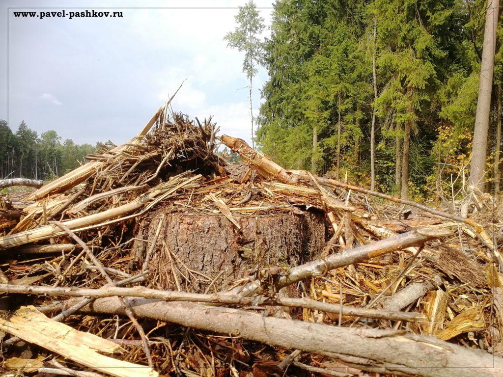 Что такое промышленная лесозаготовка?