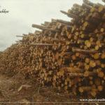Проект «Русская тайга» в 2019 году. Мы стоим на страже лесов!