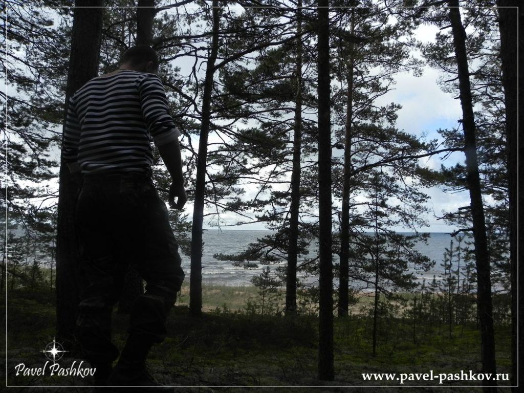 Пишу книгу о лесах России