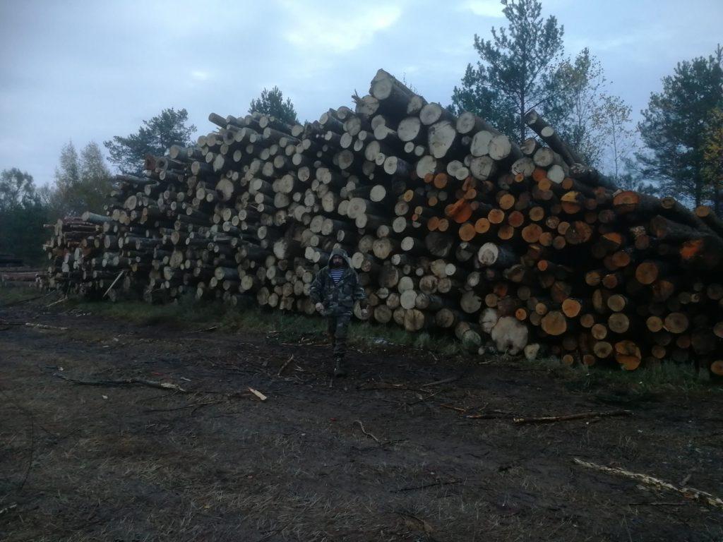 Итоги экспедиции по Новгородским лесам.
