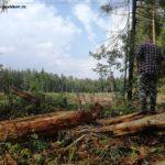 Дмитрий Медведев: «Стало банальностью говорить о том, что лес — наше богатство».