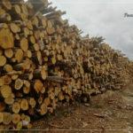 Экспедиция в защиту лесов России 2019