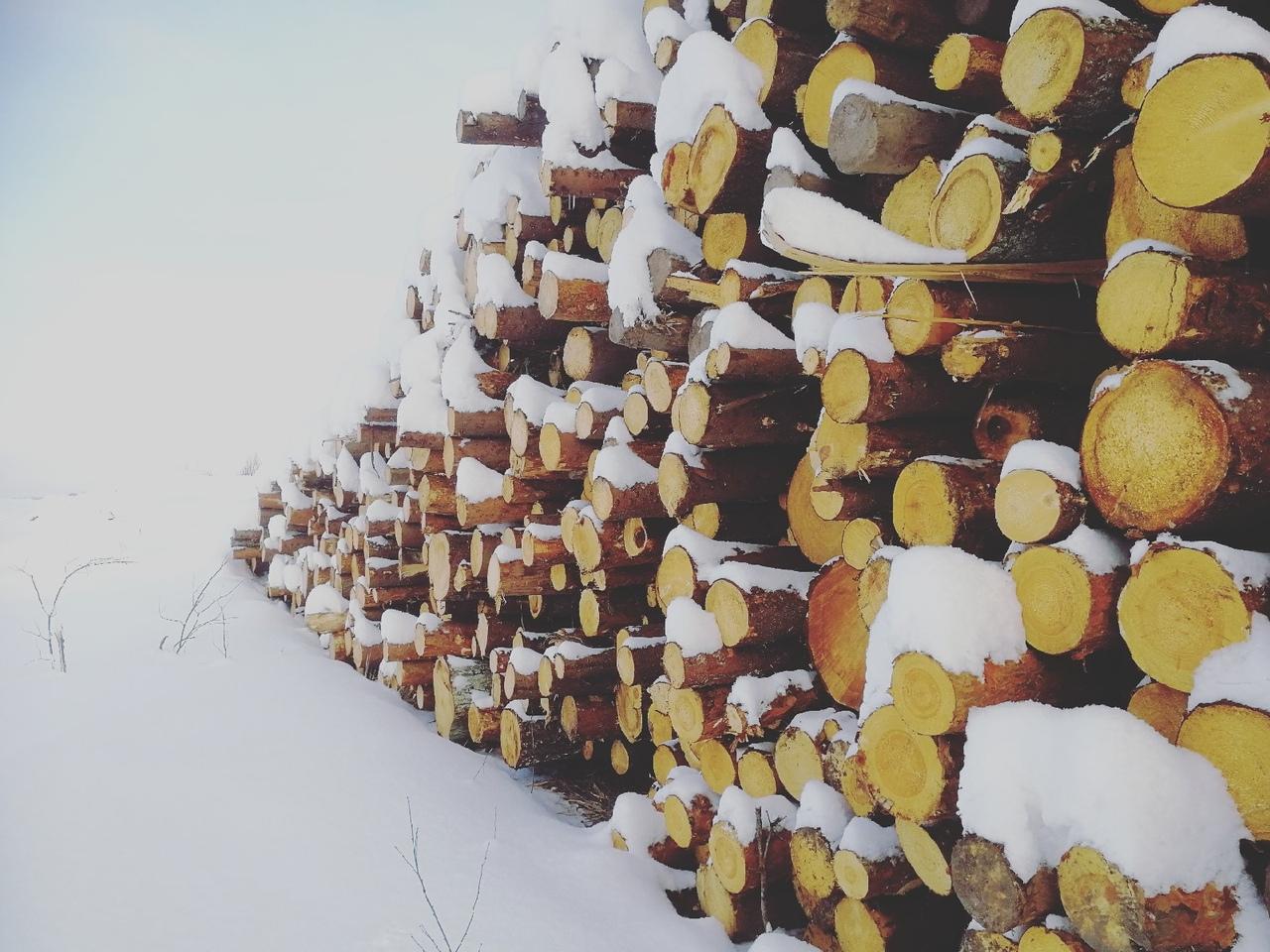 Проводим проверку лесов по центральной РФ.
