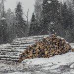 Леса Владимирской области