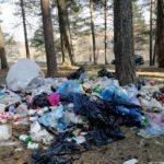 Открытое обращение о мусоре в лесах Московской области