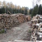«THE NEW YORK TIMES» разместил материал о масштабах вырубки Русской Тайги Китаем.