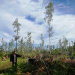 Уничтожение Русской Тайги: огонь, вода и проблемы власти и управления в природопользовании.