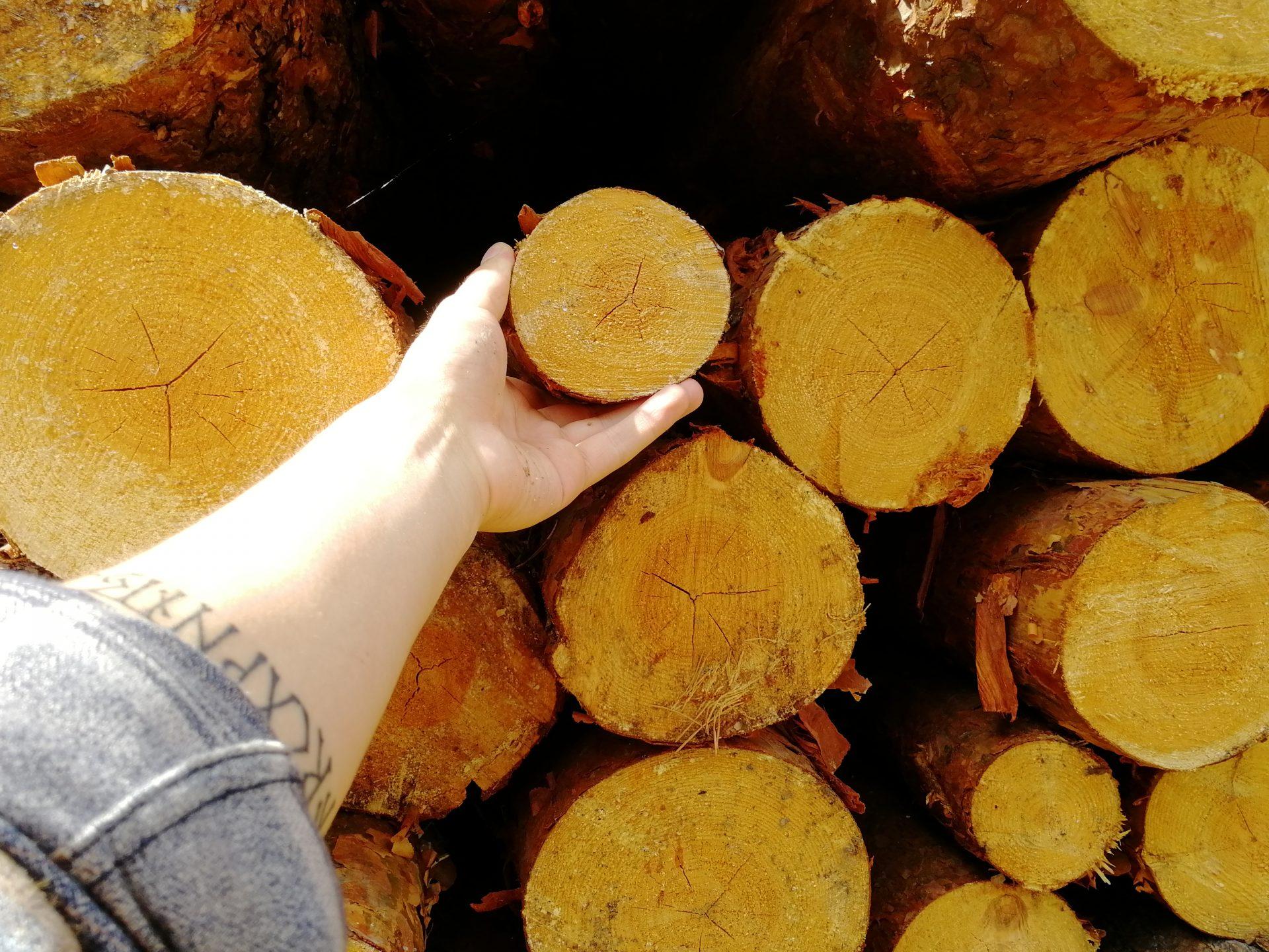 Уничтожение лесов Ленинградской области.