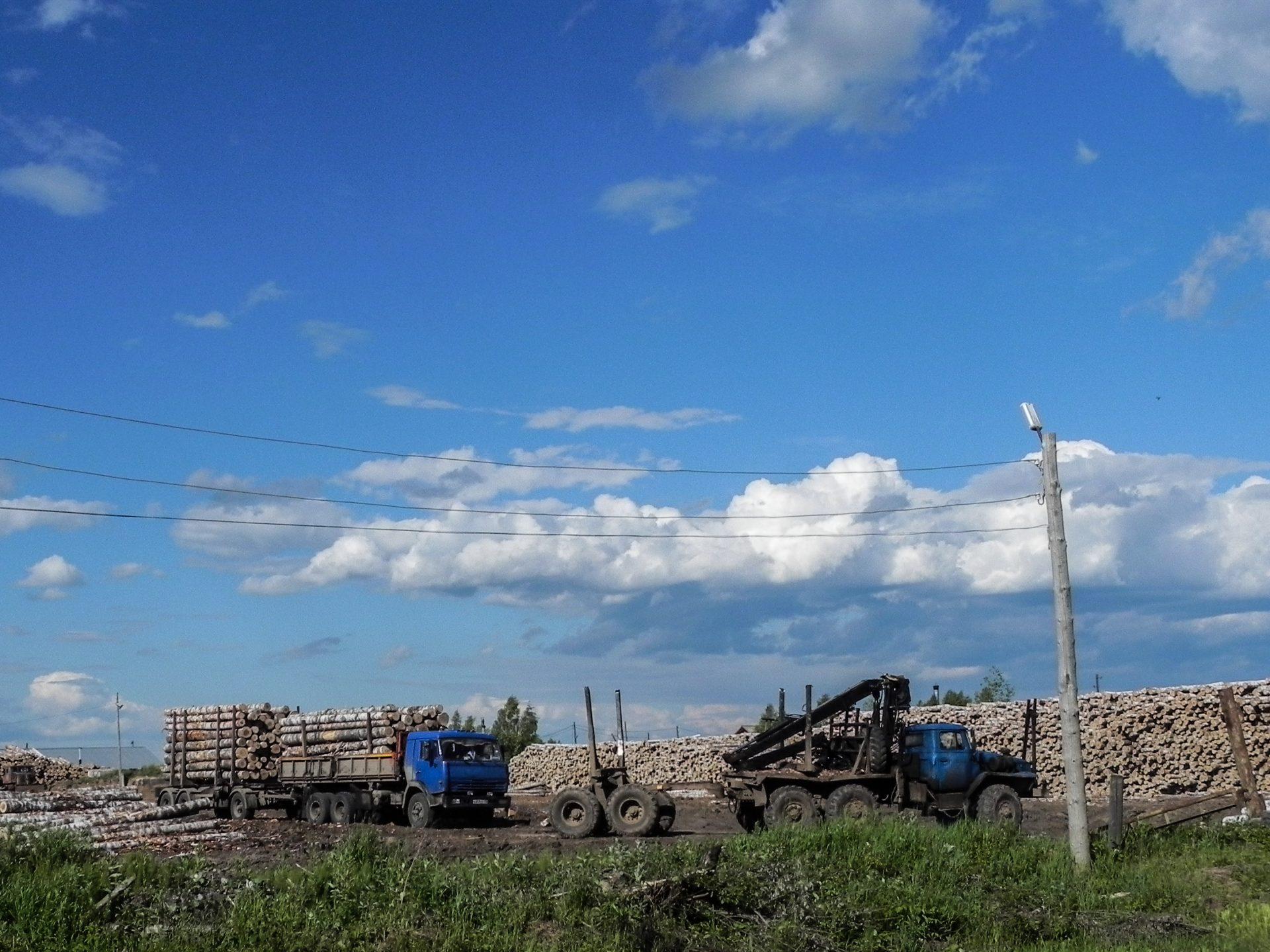 О лесах Свердловской области (заметка из экспедиции)