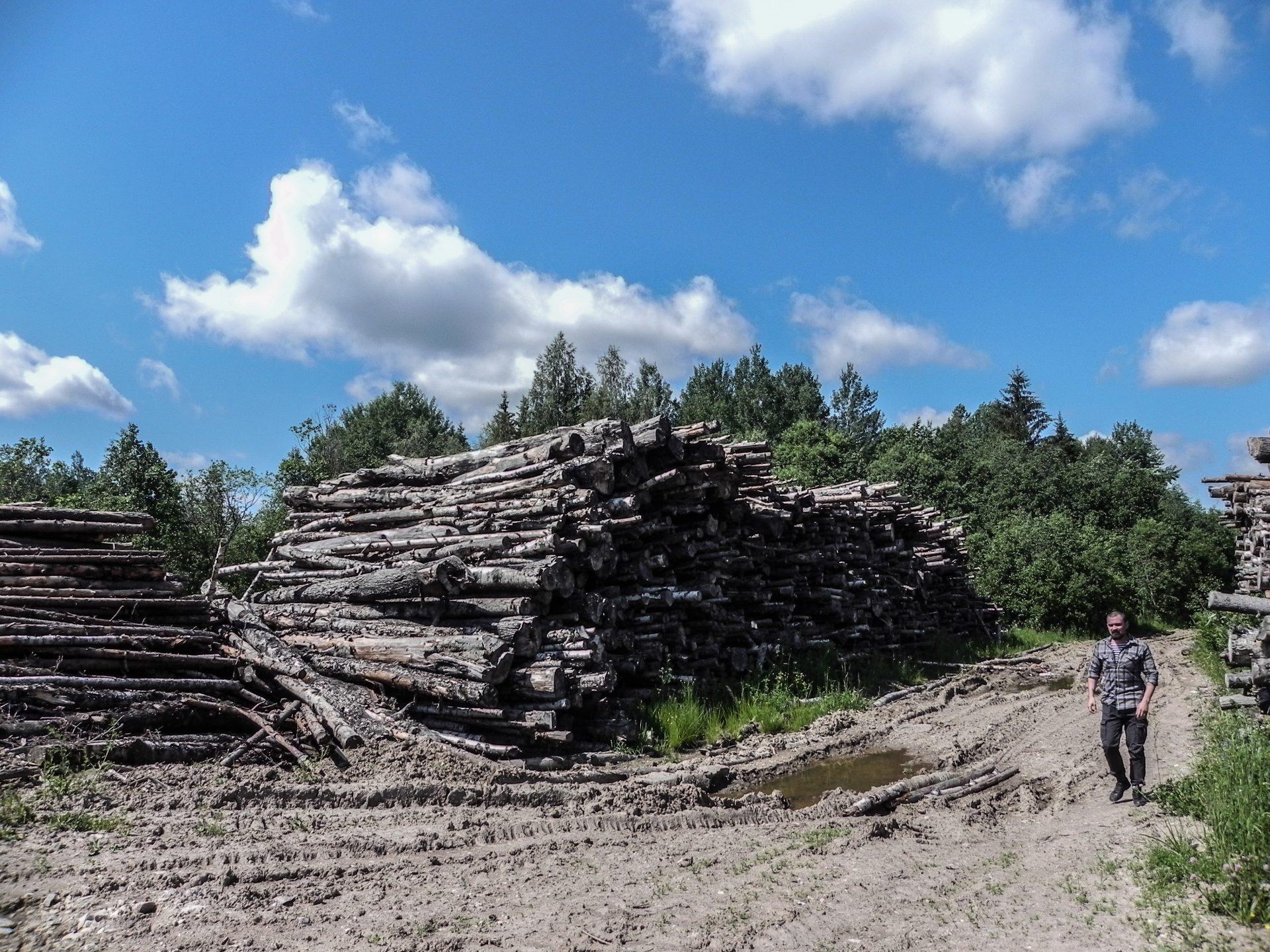 Заметка из экспедиции: лес, который никому не нужен...