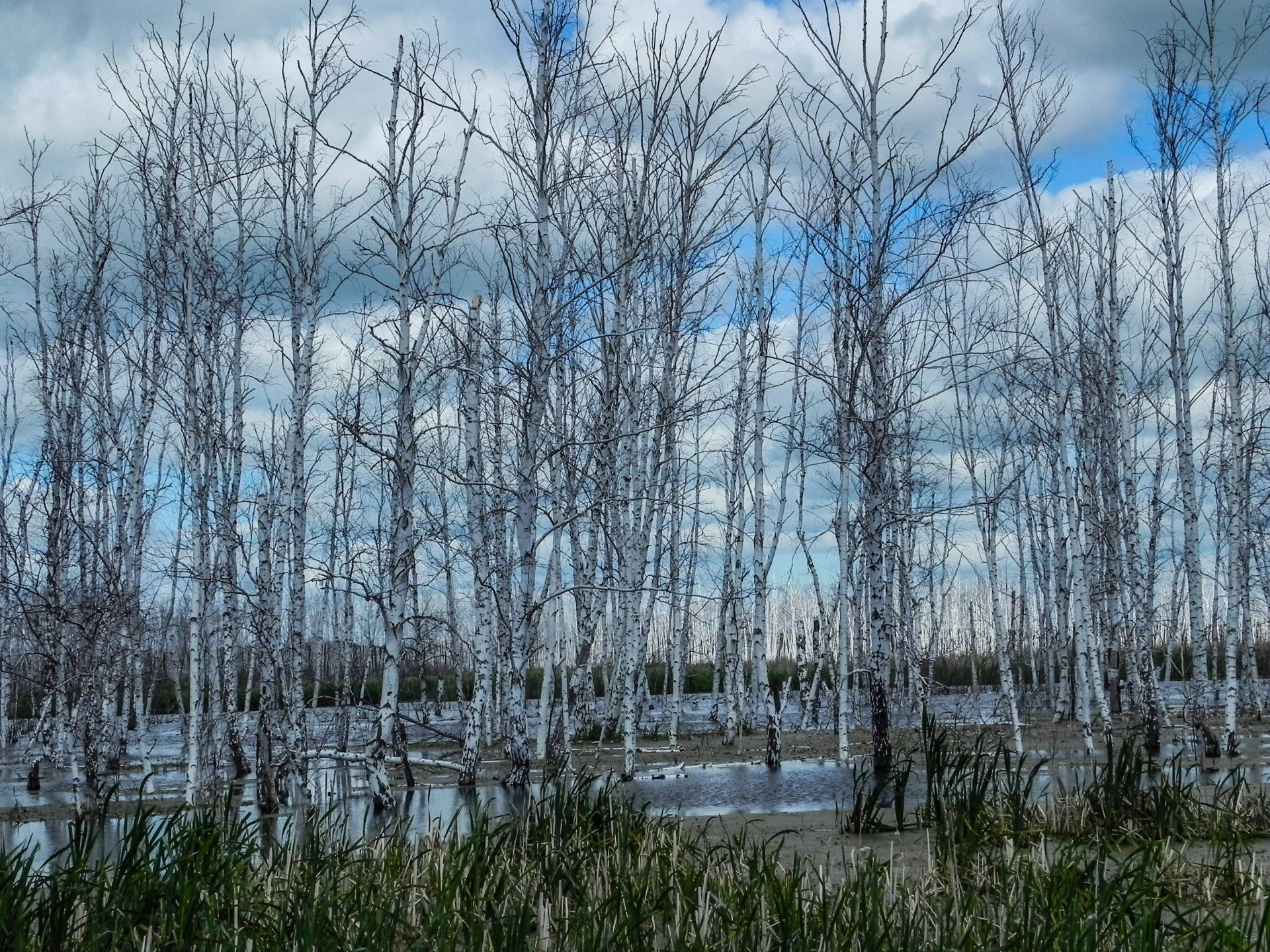 Много ли лесов в нашей стране? Проезжаем Западно-Сибирскую равнину...