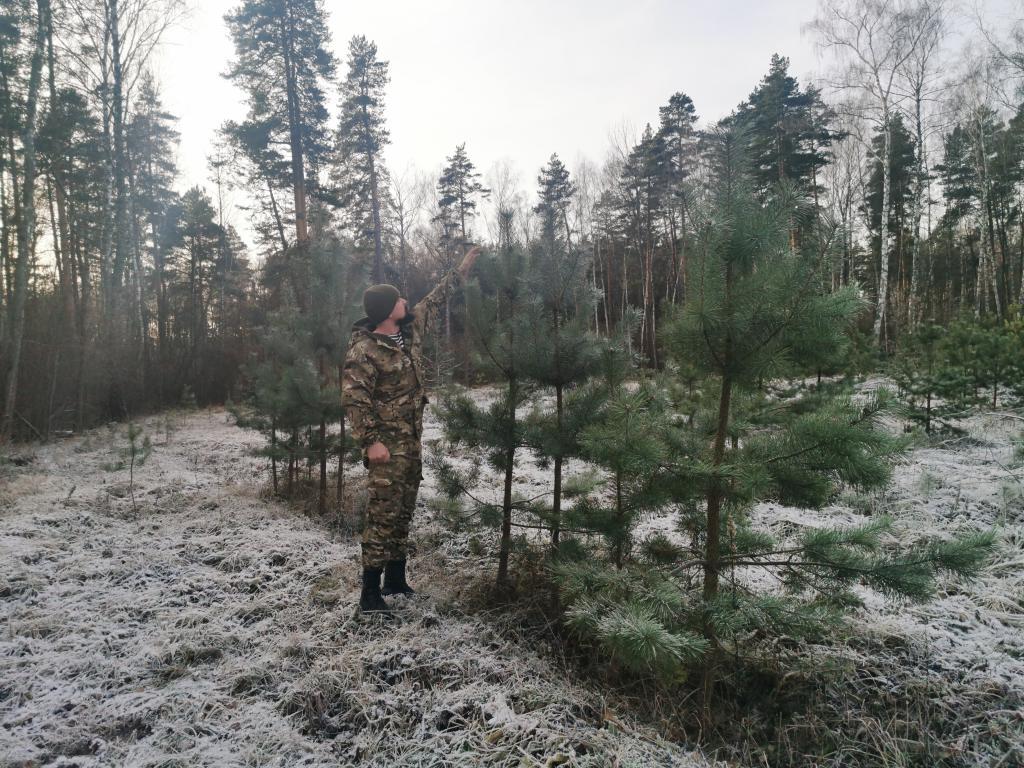 Весь ли лес и по закону лес?