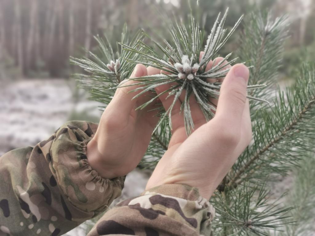Проверяю лесовосстановление по центральным регионам РФ!