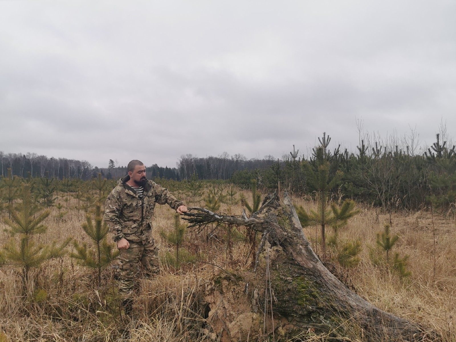 Проверяем лесничества: не рубите елку в лесу!