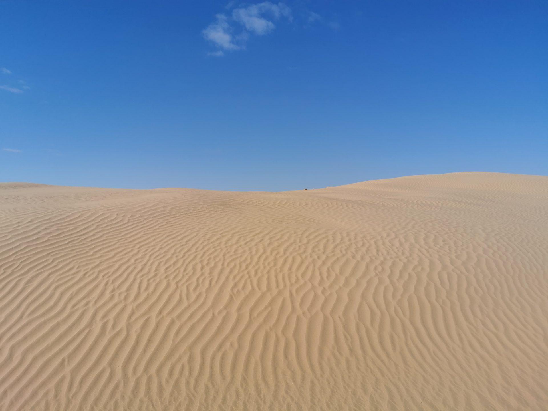 Опустынивание земель (материал из экспедиции)