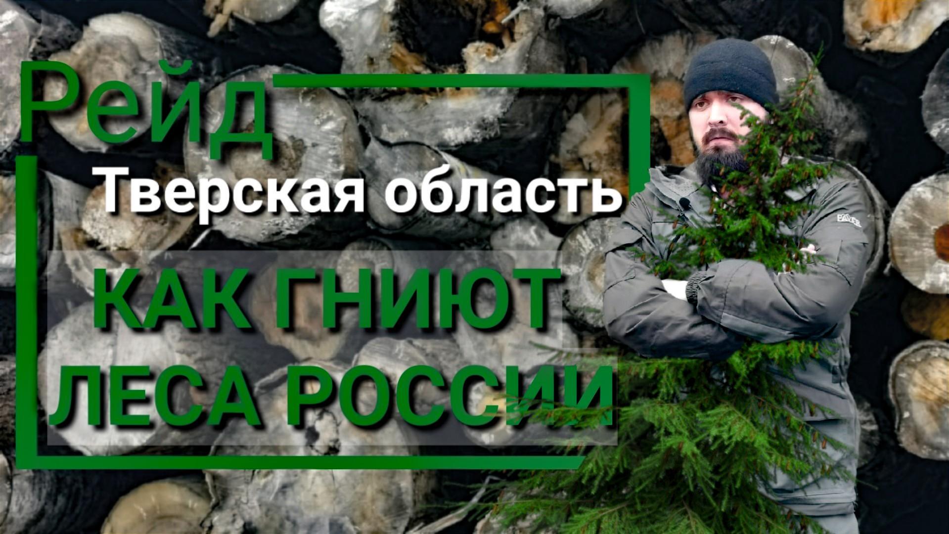 Общественный рейд по лесам Тверской области (видео)