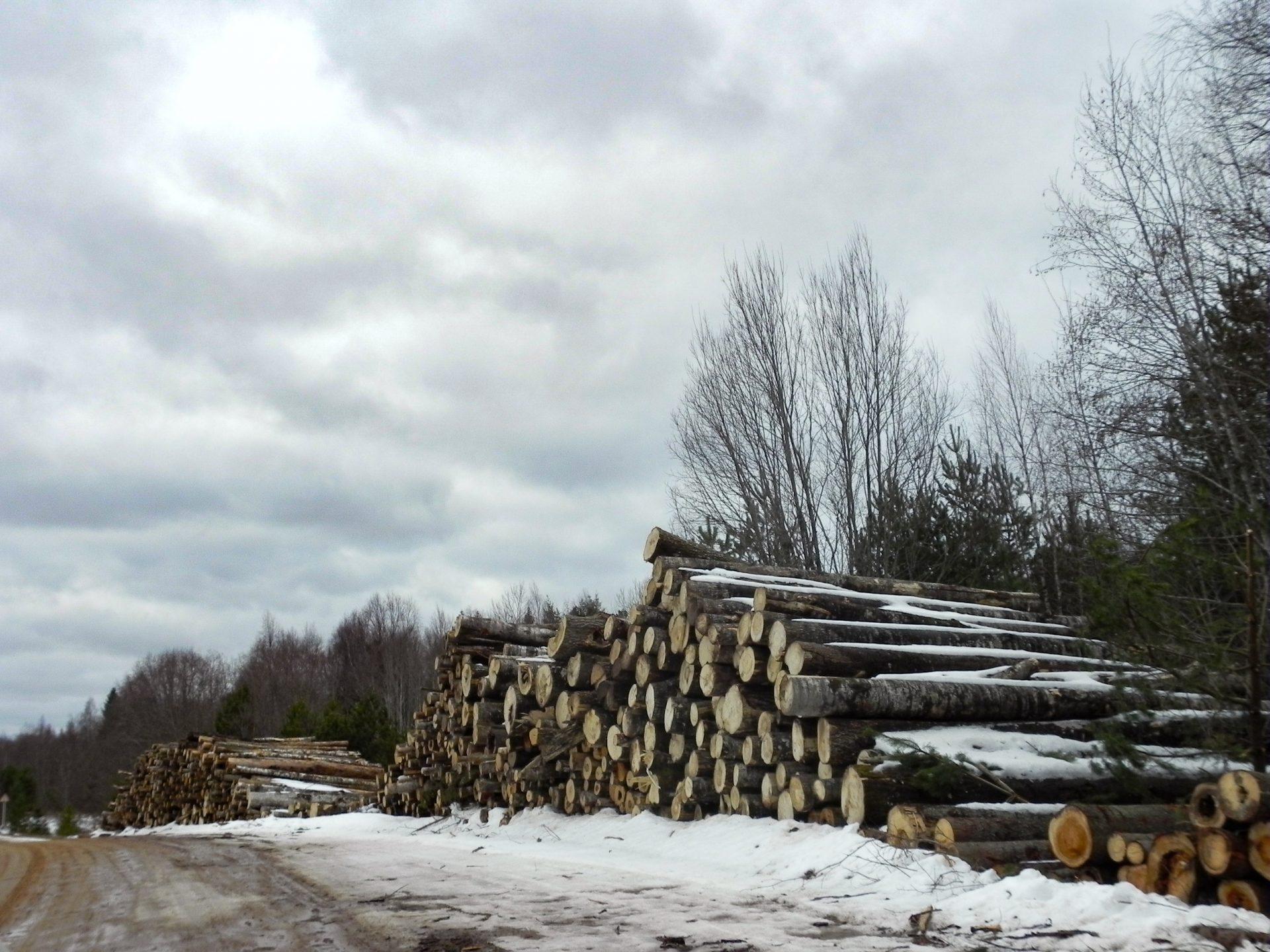 Брошенная древесина в Тверской губернии: готовимся к проведению общественного рейда.