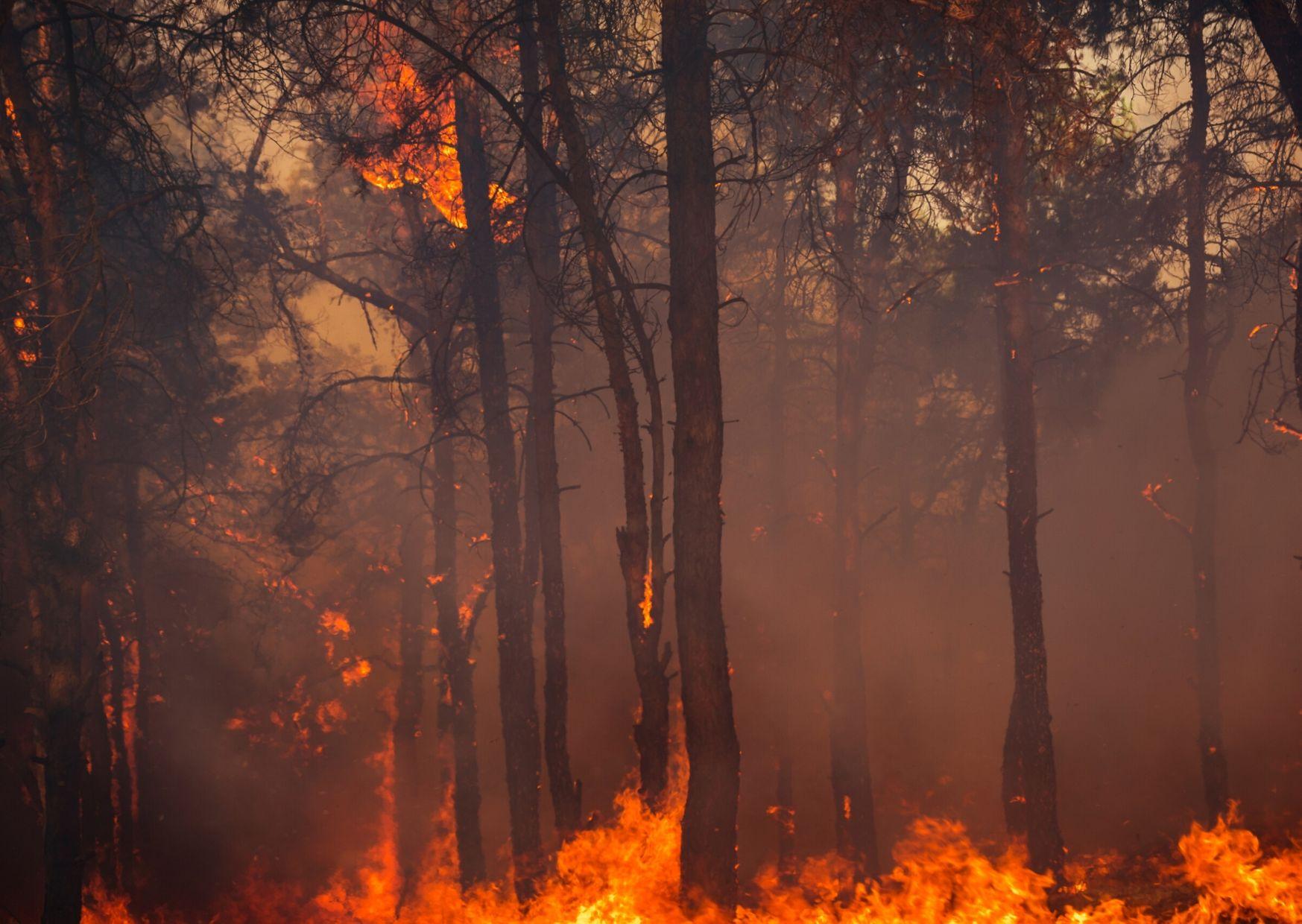 Коронавирус и лесные пожары: повторится ли сценарий 2019 года?