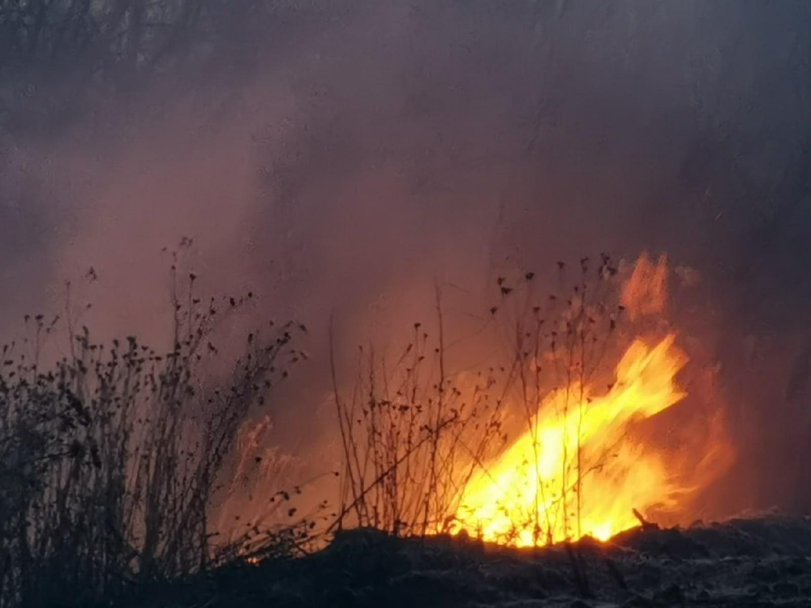 Лесные пожары уже начались!