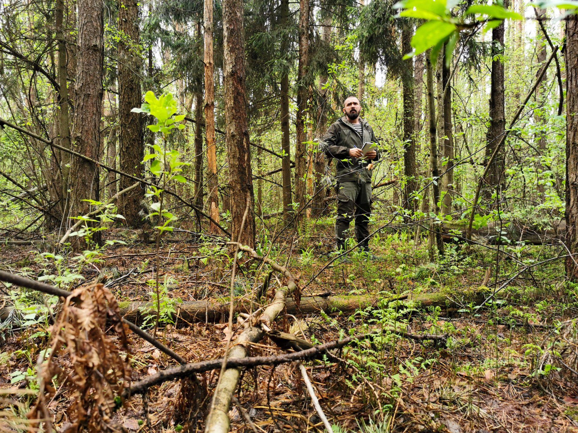 Фоторепортаж: тайга через год после лесных пожаров!