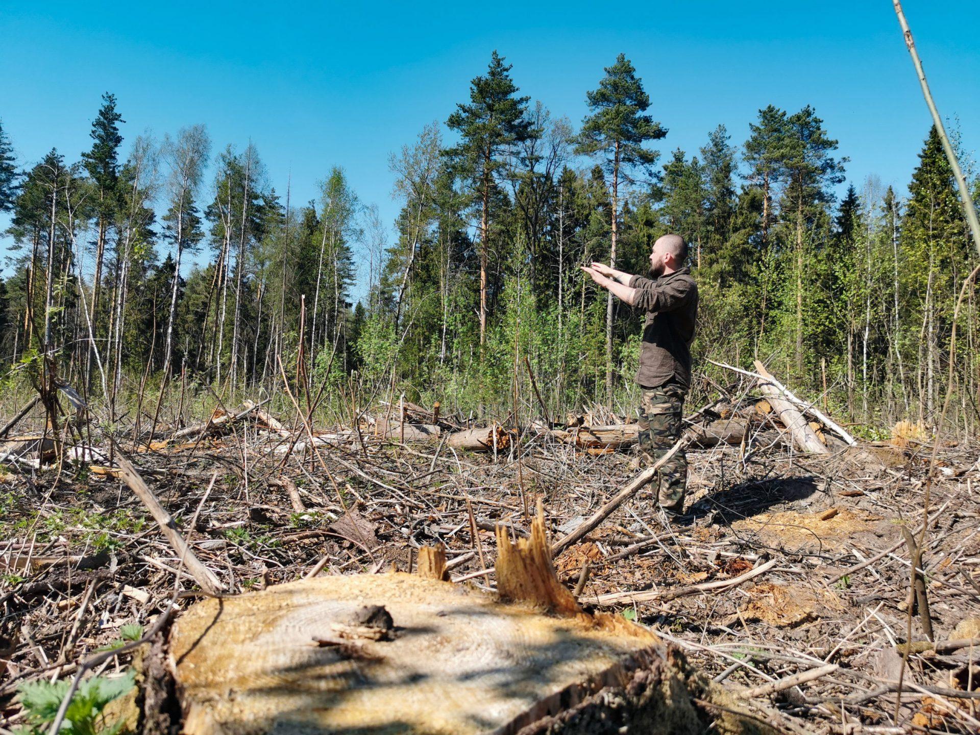 Как бизнес лоббирует уничтожение мировых лесов?