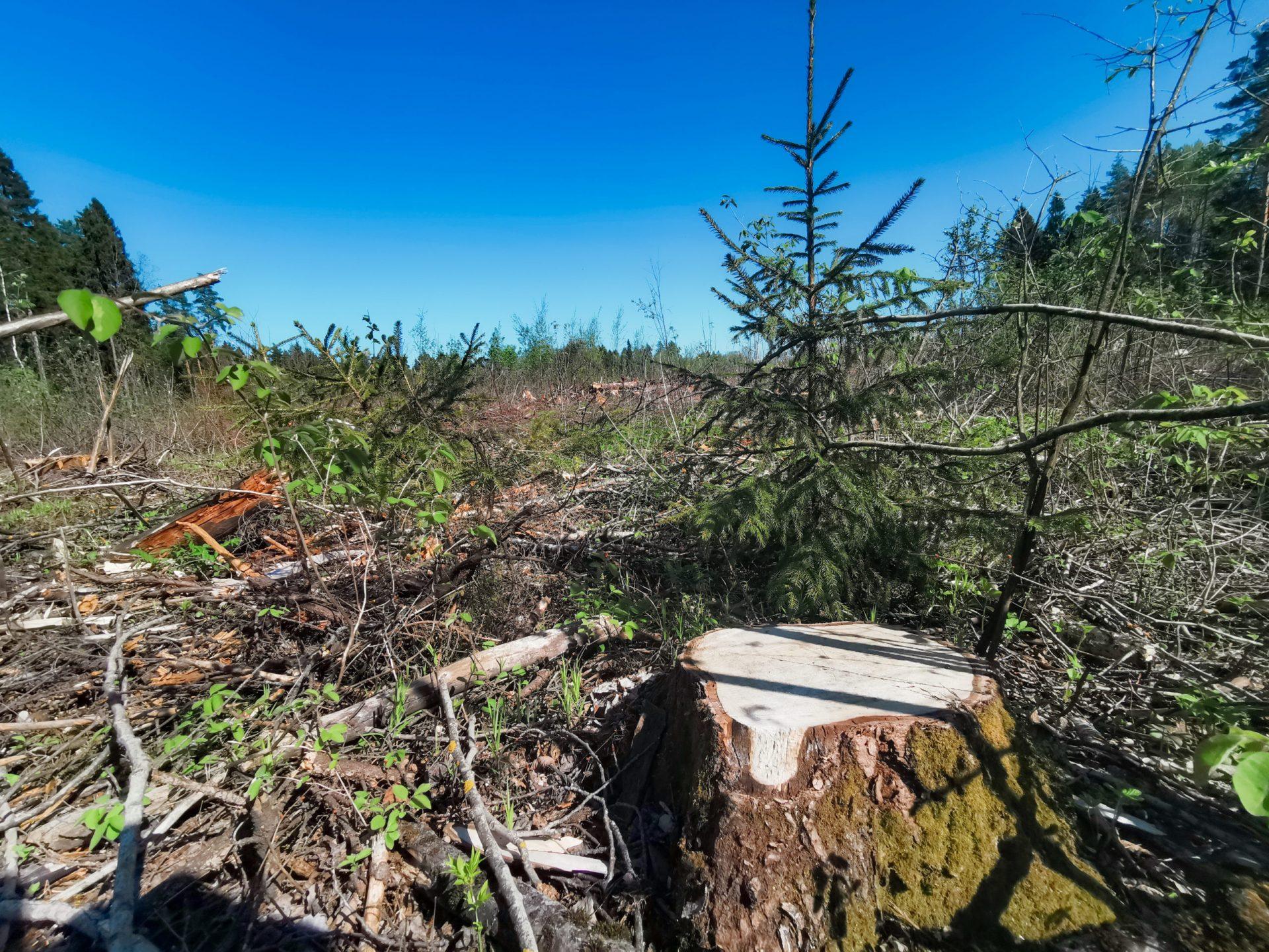 Как выглядят рубки после уничтожения Русской Тайги?