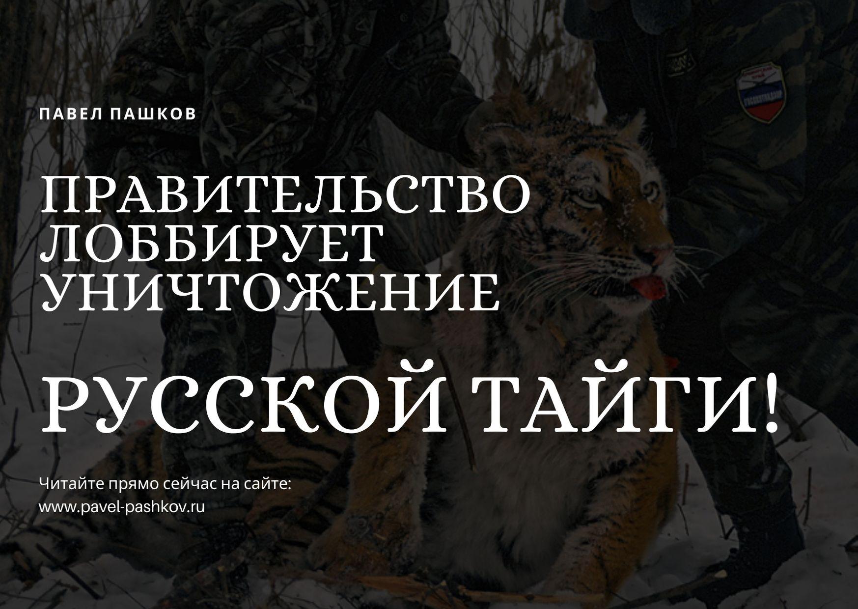 Правительство пытается окончательно уничтожить Русскую Тайгу!