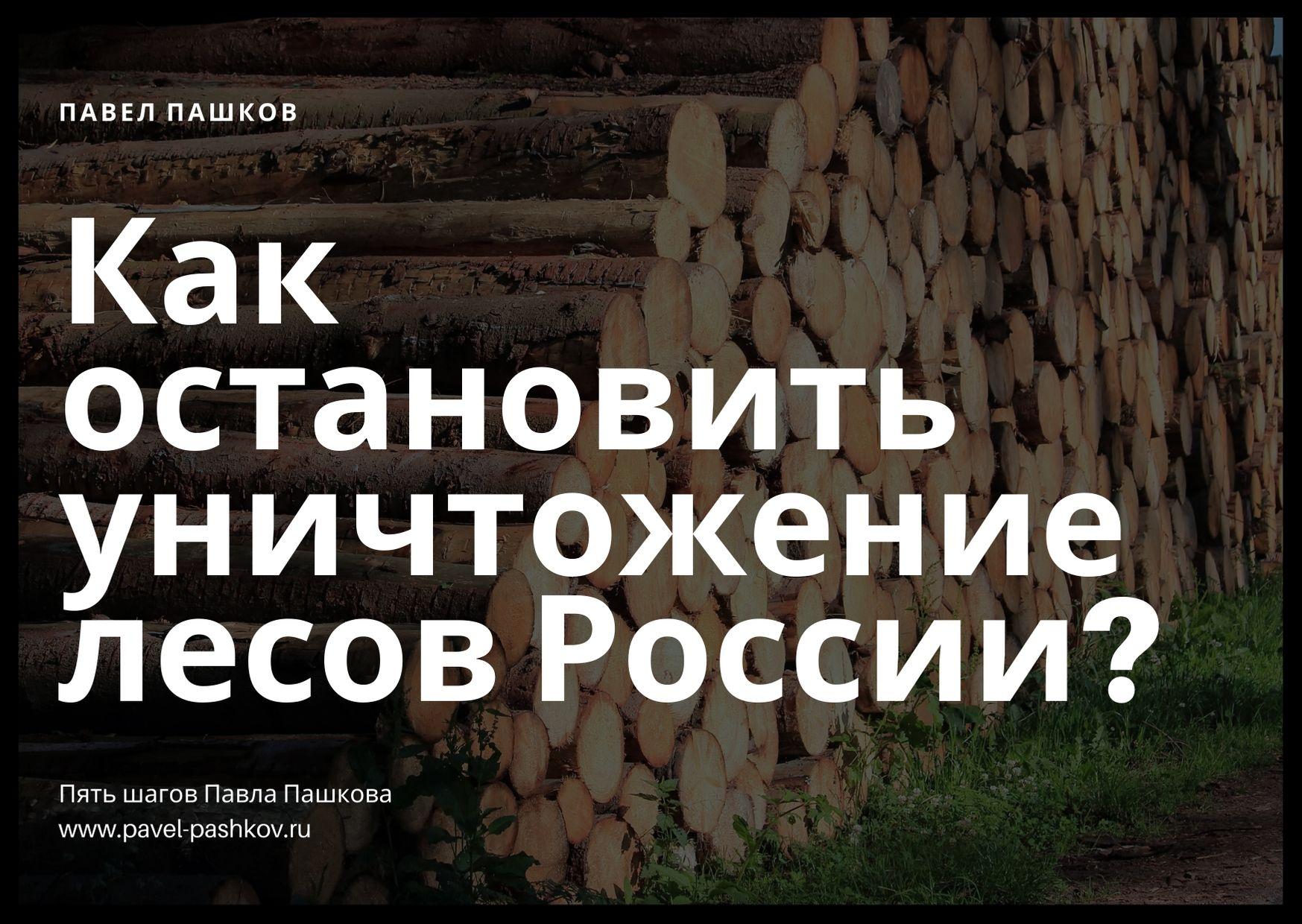 Как остановить уничтожение лесов России? Пять шагов Павла Пашкова.