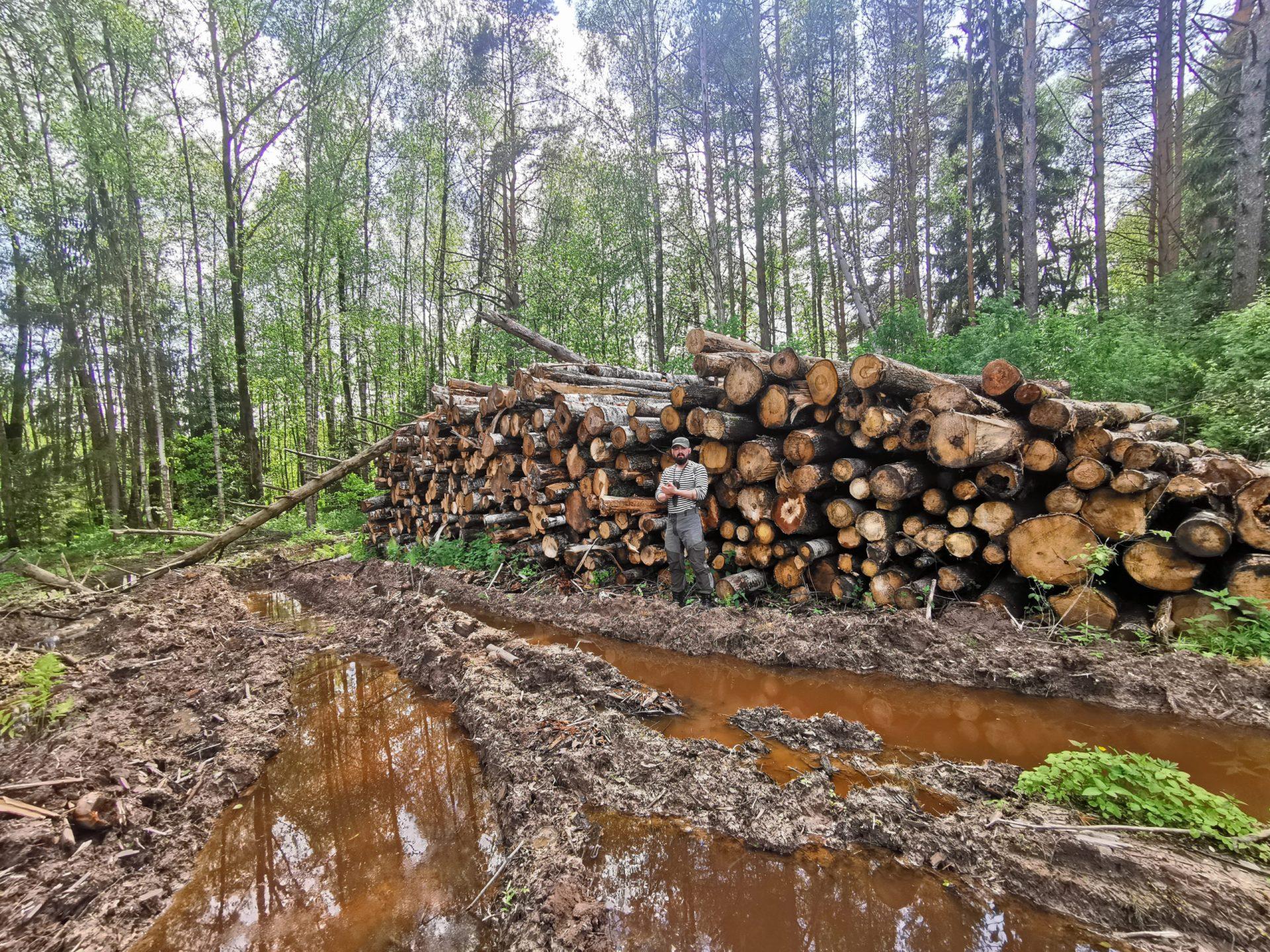 Мы победили: экспорт древесины из России будет запрещен!
