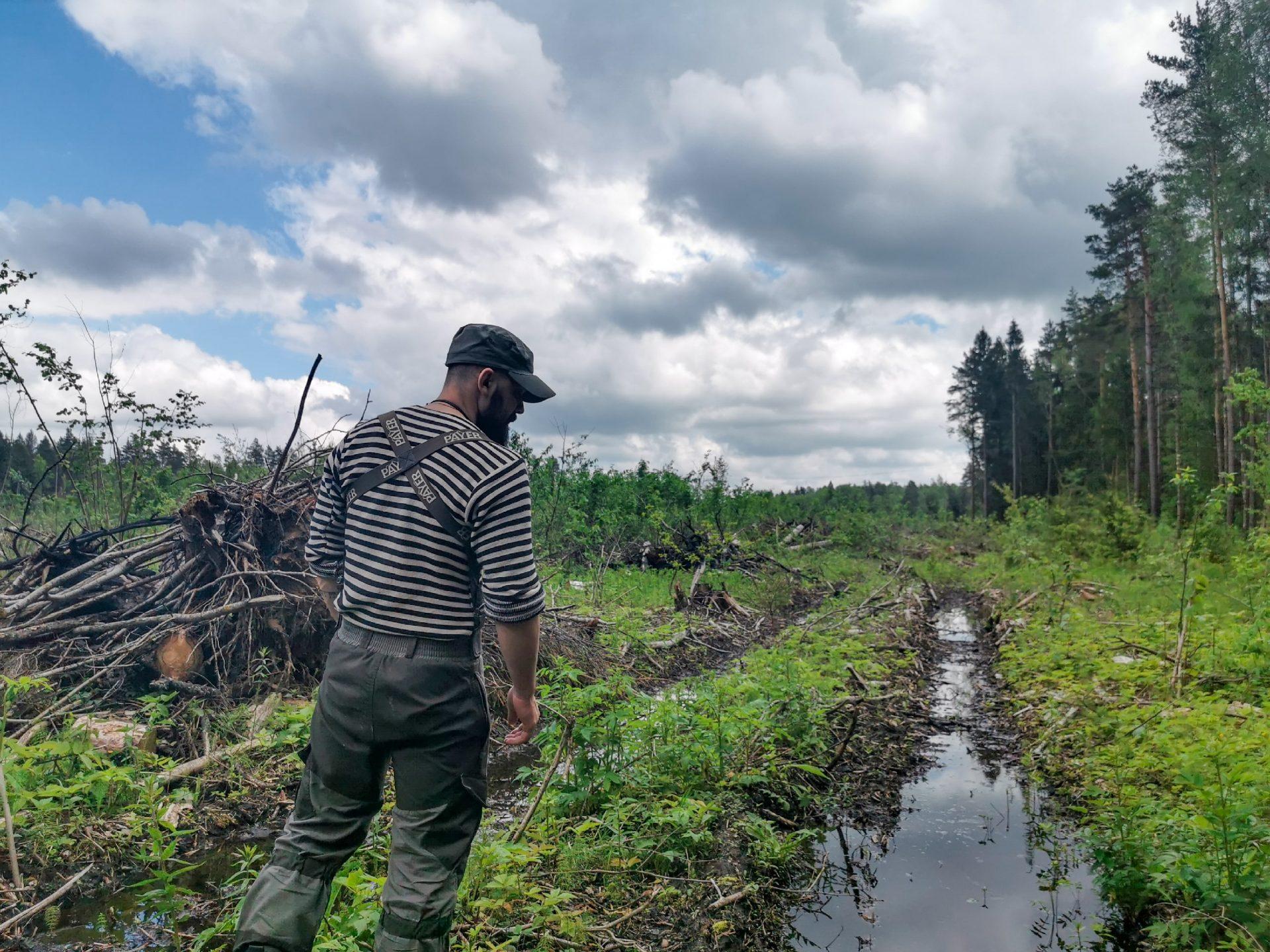 Положительные тенденции властей в защите Русской Тайги