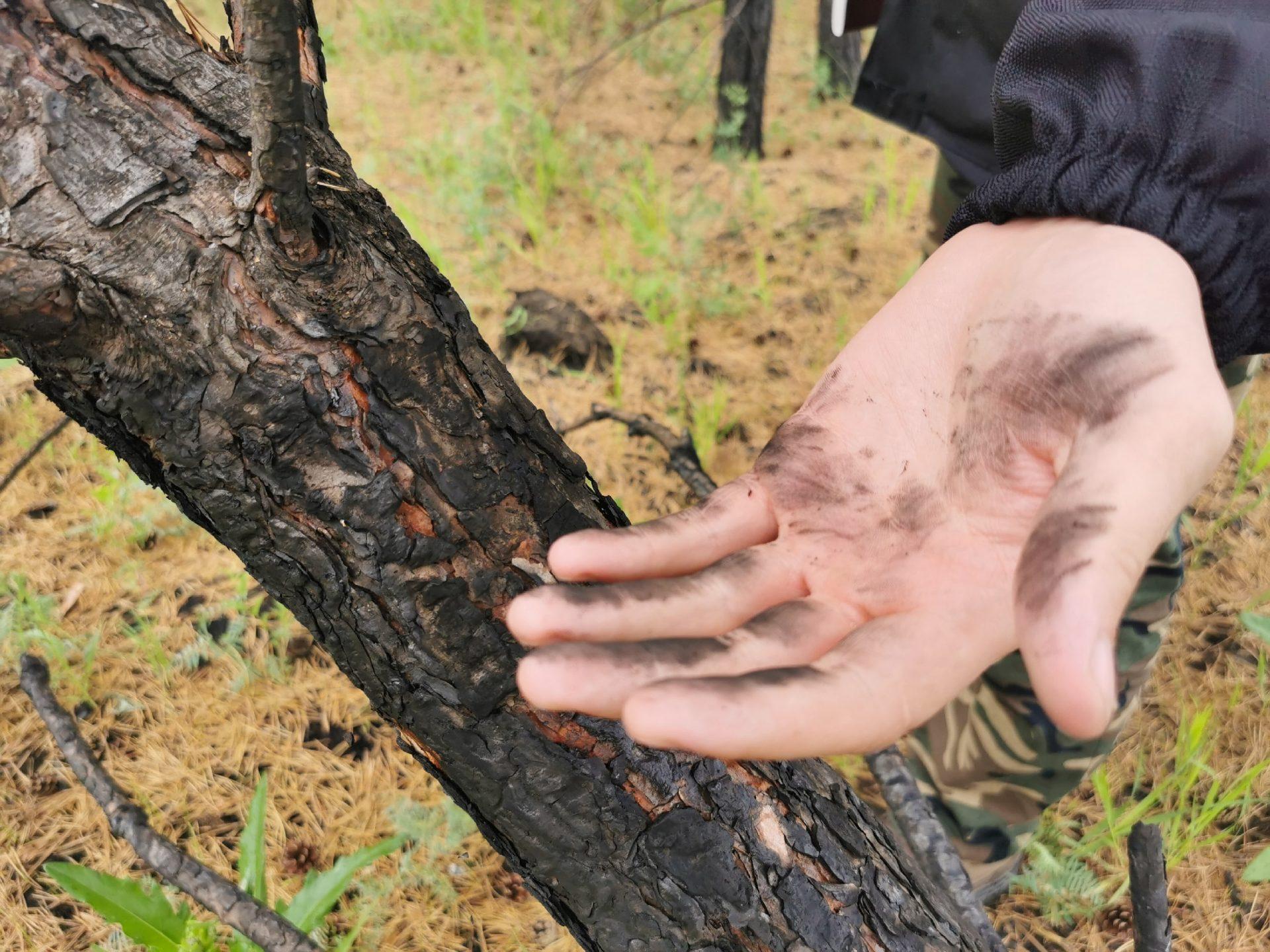 По следам лесных пожаров: заметка из экспедиции.