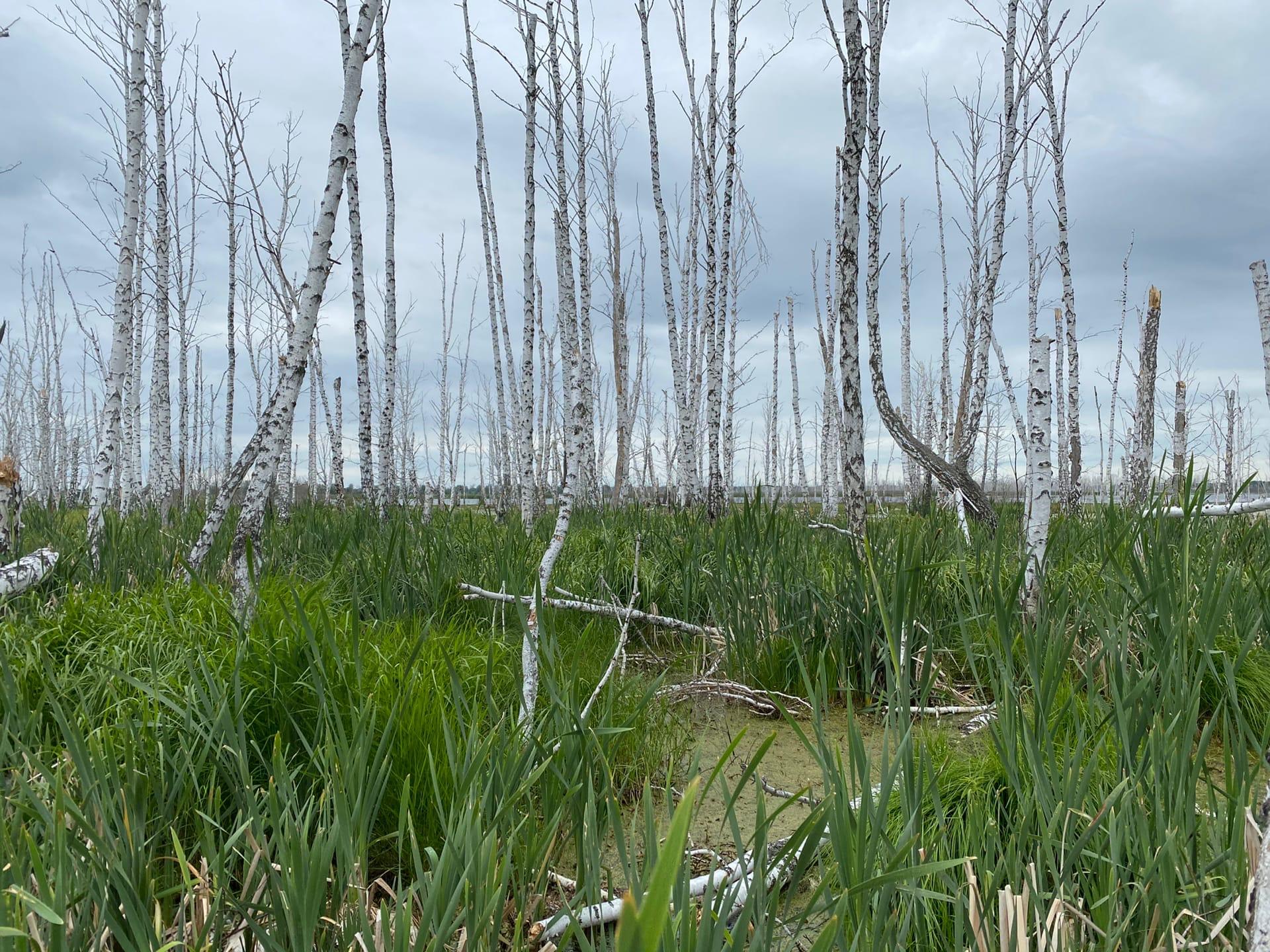 Экологическая деградация: заметка из экспедиции.