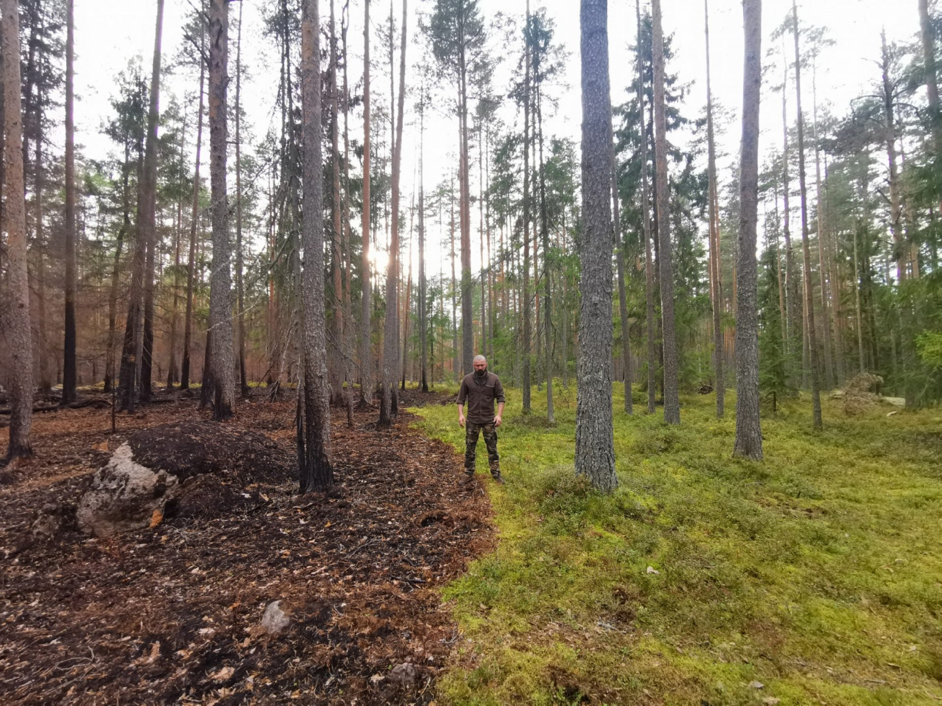 Дикие животные умирают после лесных пожаров