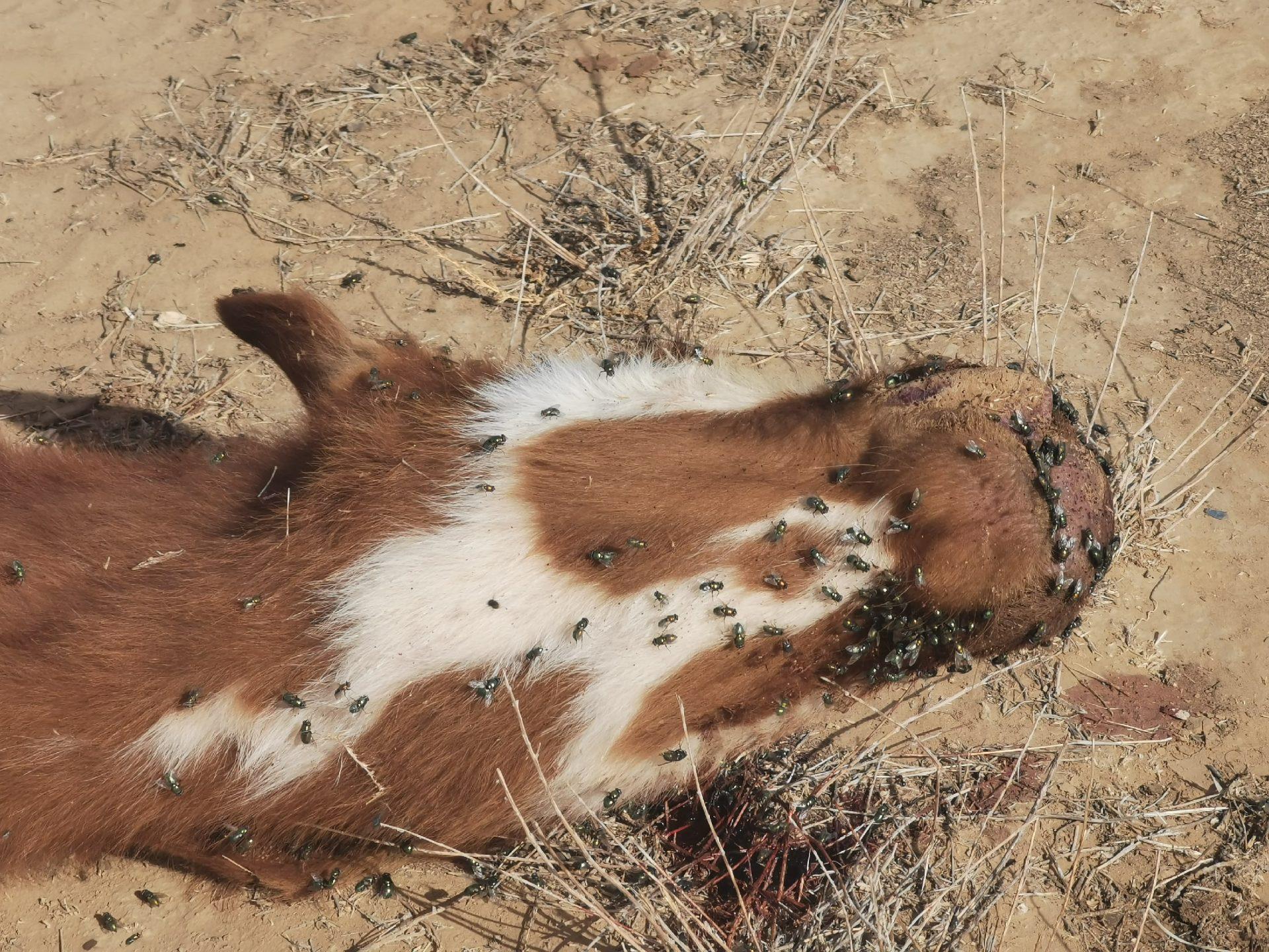 Смерть всему живому: международное десятилетие защиты биоразнообразия провалено!