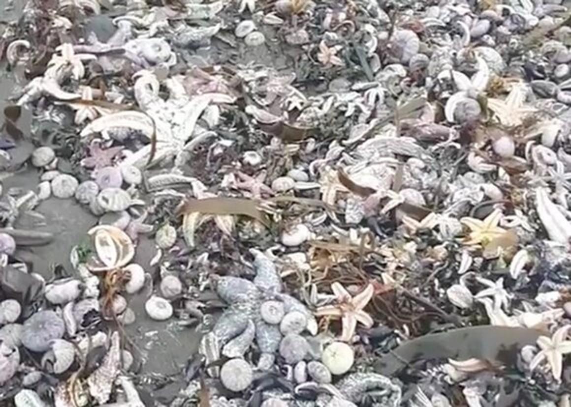 Видно ли Камчатку из Москвы? Море выбросило на берег тысячи мертвых животных