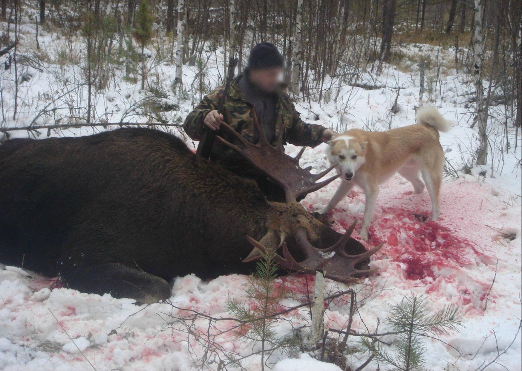 Традиция убивать: о высокостатусных браконьерах