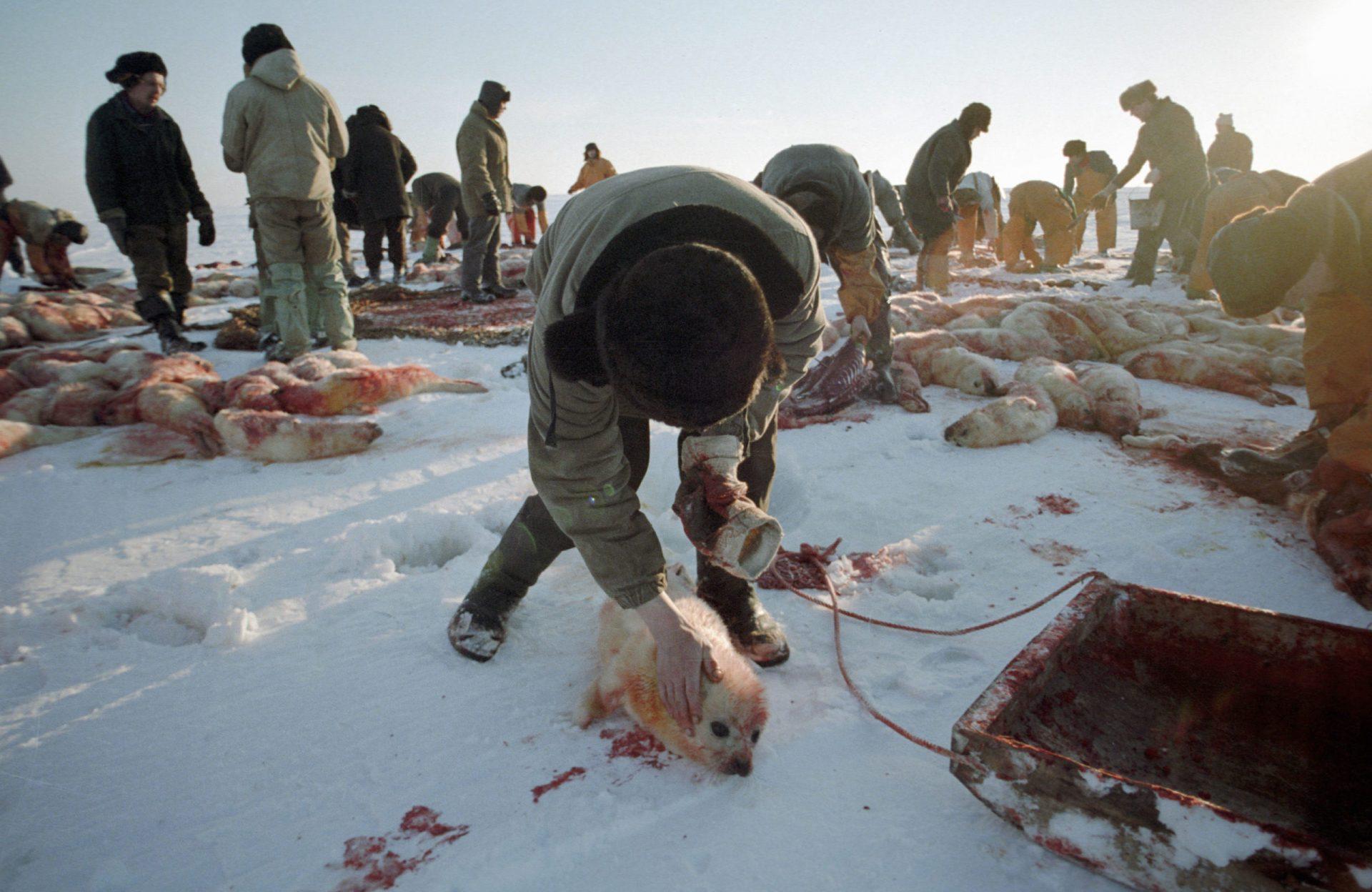 Этическое обоснование необходимости запрета охоты