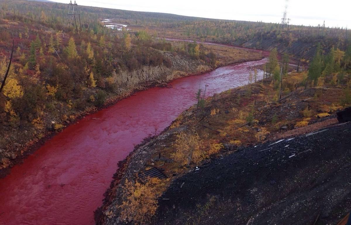 И потекли кровавые реки: в Сегеже местные жители обнаружили «кровавые реки»