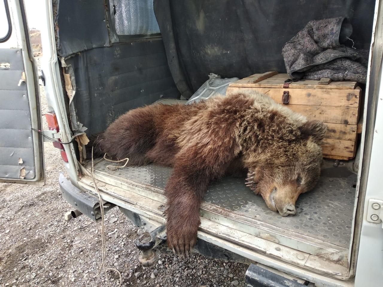 Квота на весеннее убийство медведей