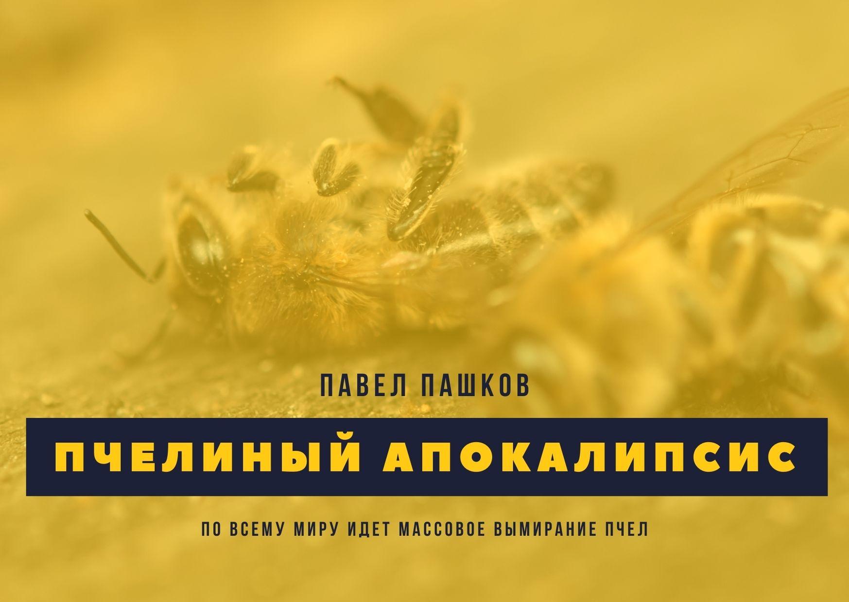 Пчелиный апокалипсис: по всему миру массово вымирают пчелы