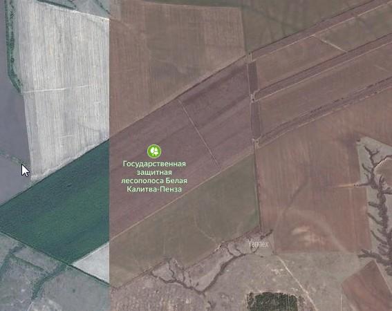 Климатозащитные леса юга. Часть первая: лесополосы степных зон.