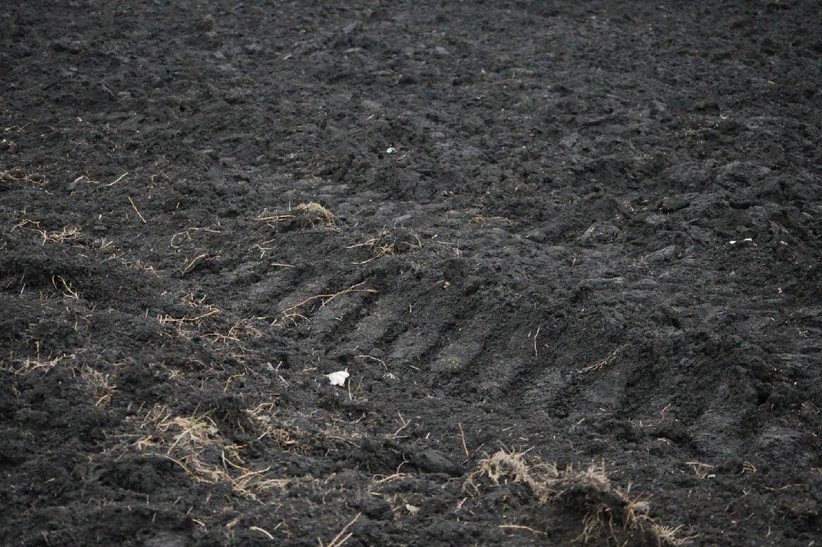 Засыхающее черноземье: об экологических бедствиях юга России