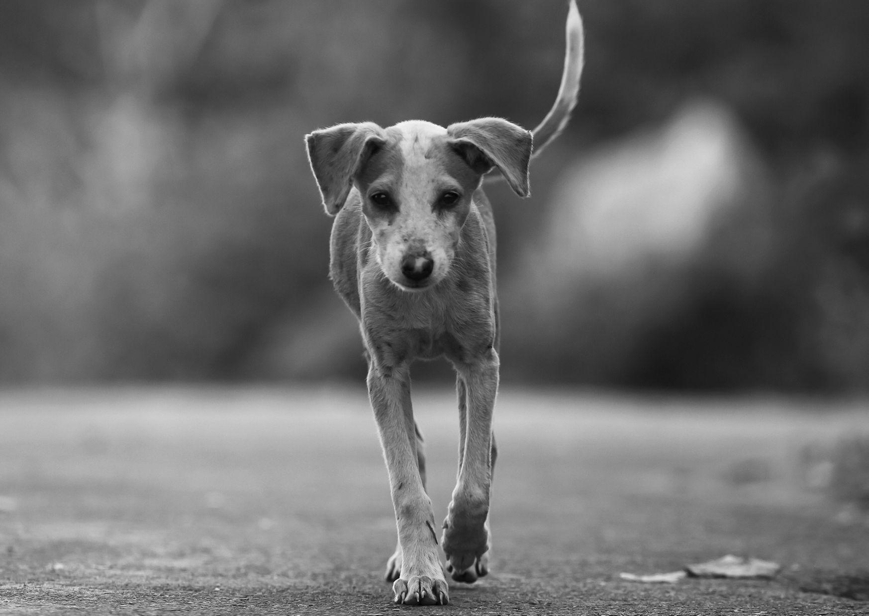 Бей животных: ученые обвинили собак в загрязнении природы