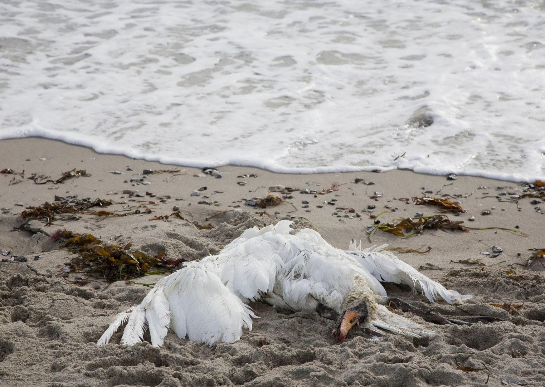 На побережье Каспийского моря зафиксировано очередное вымирание птиц