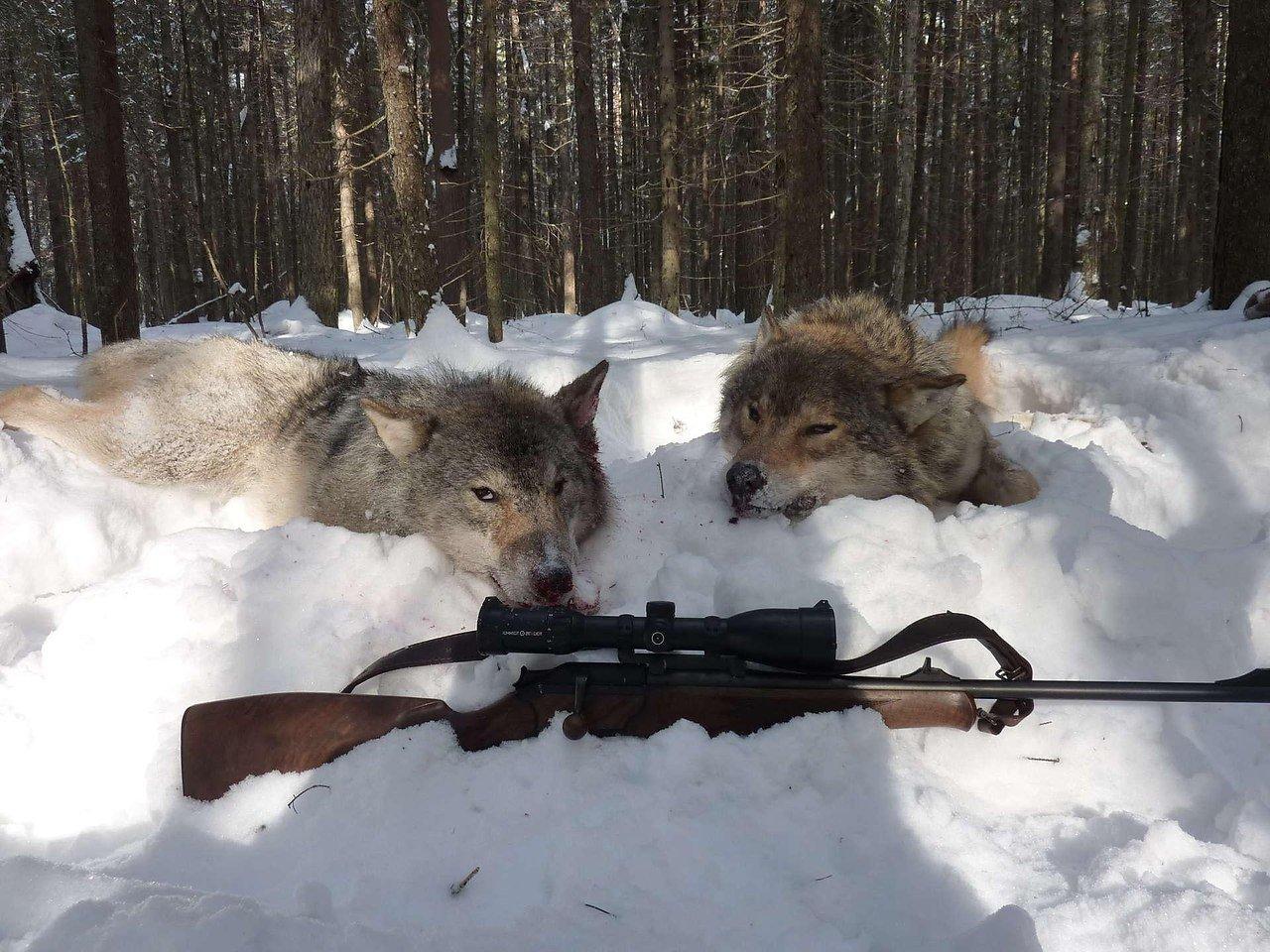 Спецзаконы для высокопоставленных охотников