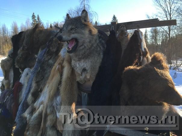 Кто покрывает бизнес на крови диких животных?